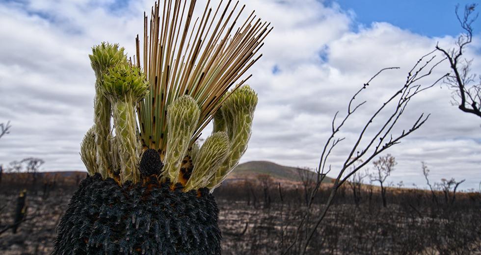 Por qué escoger el ataque preventivo: Valle Orroral (Australia)